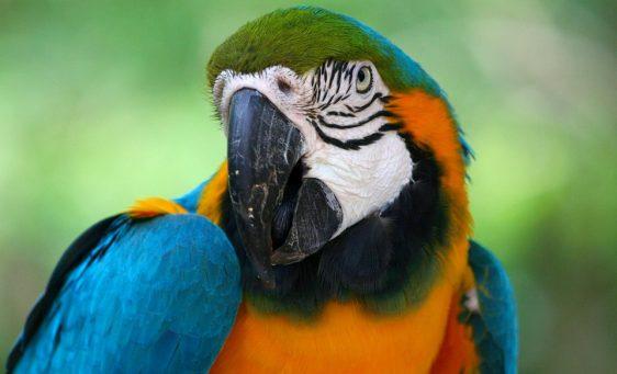 parrot-58407_960_720